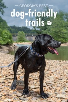 Georgia's best dog friendly trails: our favorite hikes with dogs