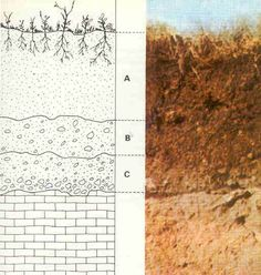 A represents soil; B represents laterite, a regolith; C represents saprolite, a less-weathered regolith; the bottom-most layer represents bedrock.