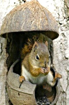 """Squirrel:  """"Well!  I have a coconut house, but the weather doesn't feel very tropical!"""""""