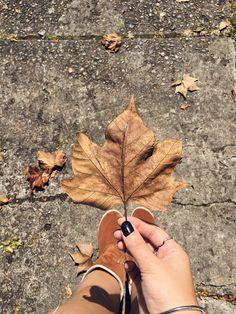 Fotos tumblr em Campos do Jordão. #flordemaaple Vsco Photography, Autumn Photography, Story Instagram, Instagram Feed, Changing Leaves, Golden Color, Carpe Diem, Girl Photos, Photo Editing