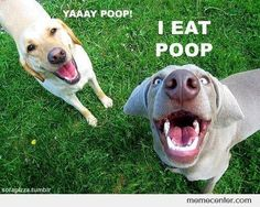 I Eat Poop