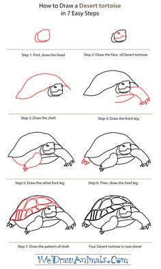 Easy Drawings How To Draw Easy Animals Step By Step Image Guide - How To Draw Easy Animals Step By Step Image Guide hat you spend some time studying the distinguishing characteristic of the animal like the trunk of Tortoise Drawing, Tortoise Tattoo, Tortoise Care, Tortoise Habitat, Sulcata Tortoise, Image Guide, Russian Tortoise, Desert Animals, Directed Drawing