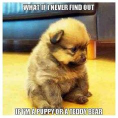 But, iff you let them catch you, you will never want to let go. See why at https://barkingtails.com | #cute