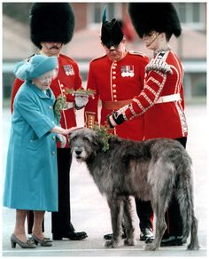 Irish wolfhound and the queen