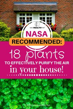 NASA-Recommended: 18 Plants To Effectively Purify The Air In Your House! via @dailyhealthpost
