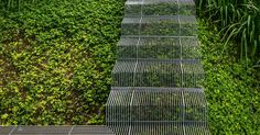 Landscape Design Idea - Low impact stairs that allow plants to grow below them