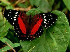 ThingLink vlinders