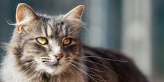 petition: Demand justice for the cats of Ty-Nant Sanctuary., United Kingdom