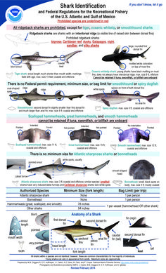Do you know a #porbeagle from a #smoothhound? #sharkpups! Parents & #Teachers, #kids especially love these posters. Download them here!