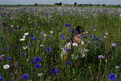 ::An enchanting moment (and little girl) in the flower fields of St. Estephe.:: Lovingly captured and chronicled by her mama, Mimi Thorisson of Manger.