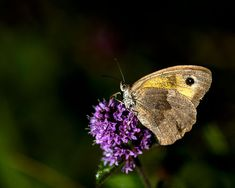Moth, Insects, Animals, Pictures, Animales, Animaux, Animal, Bugs, Animais