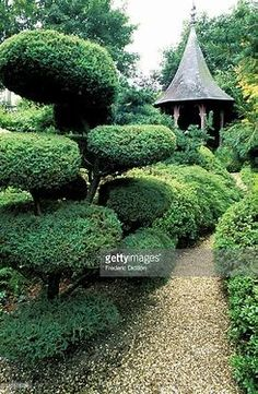 Image result for Japanese Topiary Japanese Landscape, Topiary, Beautiful Places, Image, Topiaries