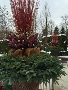 Winter container arrangement | Deborah Silver | Dirt Simple