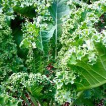 Raw Lemon Garlic Marinated Kale Recipe