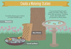 Creating a Bee-Friendly Garden - Making a Safe Watering Station for Bees in Your Garden