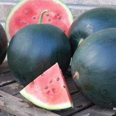 Watermelon Black Tail Mountain Organic - A top performing watermelon for northern climates, also produces well in warmer zones. Consistently produces round fruit that have a sweet, candy-like flesh. A real summer time treat! Pumpkin Squash, Buy Seeds, Green Fruit, Delicious Fruit, Garden Seeds, Trends, Flower Seeds, Garden Planning, Organic Gardening