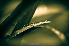 Water by Tommy Gamboa Flores on 500px