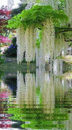 GiF WORLD - Nature - Comunidad - Google+ Красивые Сады, Красивые Места, Весенние Цветы, Цветущие Деревья, Осенний Пейзаж, Фотографии Природы, Необычные Цветы, Удивительная Природа