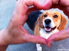 Beagle Love Selfie: Csináld meg te is!