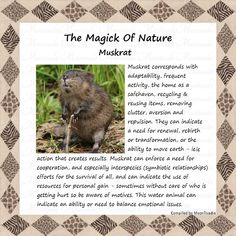 Animal Spirit Guides, Spirit Animal, Animal Medicine, Power Animal, Animal Totems, Beautiful Creatures, Magick, Mystic, Zen