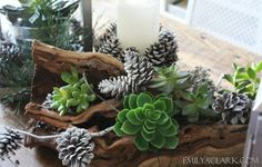 succulent, driftwood and pinecone centerpiece