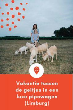 Vakantie vieren in een luxe pipowagen bij Buitengoed de Gaard in Limburg
