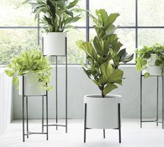Dundee White Floor Planters at Crate and Barrel Canada. Discover unique furniture and decor from across the globe to create a look you love. Large Indoor Planters, Tall Indoor Plants, White Planters, Large Plants, Outdoor Planters, Hanging Plants, Garden Planters, Modern Planters, Planter Pots