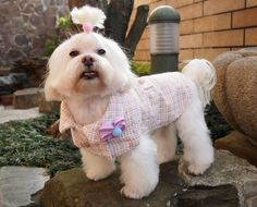 Small dog coat with purple flower brooch and cotton lining/ light pink boucle tweed (size: SM). $44.00, via Etsy.