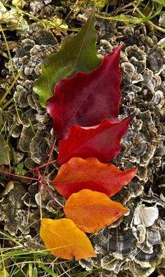 Autumn Leaves in full color spectrum
