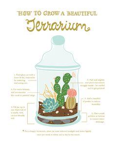 how to grow a terrarium