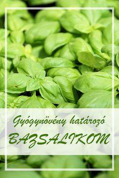 A Bazsalikom népies neve: Királyfű, németbors. Hogyan gyűjtsük a Bazsalikom gyógynövényt? A szár virágos, leveles felső részét hasznosítják gyógyászati célokra. Fűszer céljára a szárakról a virágot és a levelet morzsolják le. Június-augusztus folyamán aratják. Health 2020, Health Benefits, Spinach, Herbalism, Spices, Remedies, Herbs, Weight Loss, Vegetables