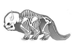 sky bison skeleton