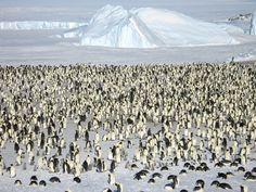 Antarctica, Wow Look at all Those Penguins !