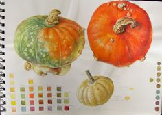 Botanical Sketches and Other Stories: Cucurbits and other monsters