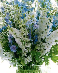 Blue-and-White Aerin Lauder - Aerin Lauder Hamptons Home Types Of Flowers, Fresh Flowers, White Flowers, Beautiful Flowers, Alter Flowers, Aerin Lauder, Blue Succulents, Succulent Centerpieces, Blue Flower Centerpieces
