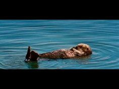 Sea otters playing and grooming. Get free resources, activity ideas, and the… Reading Group Activities, Reading Lessons, Hands On Activities, Fun Learning, Fun Activities, Teaching Writing, Teaching Resources, Teaching Ideas, 6th Grade Reading
