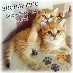 Paper Dolls, Cute Cats, Pets, Babys, Animals, Life, Good Thursday, Italian Greetings, Funny Pics