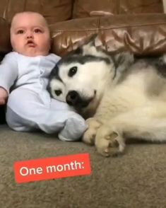 Cute Funny Baby Videos, Cute Animal Videos, Funny Animal Pictures, Funny Babies, Funny Baby Faces, Funny Baby Quotes, Baby Memes, Cute Little Animals, Cute Funny Animals