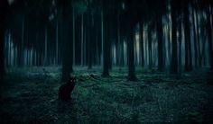 Black Cat Forest