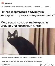 im translating russian memes for practice and i… theyre so fucking funny me: *flips pillow over to the cold side and goes back to sleep* nurse who's been watching me in a coma for the past 5 years: Funny Shit, Funny Posts, The Funny, Hilarious, Funny Stuff, Funny Things, Memes Humor, Bts Memes, Funny Quotes