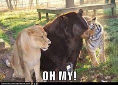 #BLT on AnimalCapshunz.com ~ Animal Capshunz: Visual Reference Ahoy!