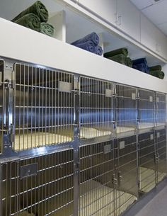Cage area. Current patients: Infinity, Smile, Caramel, Chocolate and Forrest. Current residents: Matt and Missy. (Let me know if I'm missing any, also if it's pets that you own then they usually don't stay here) Main workers: All
