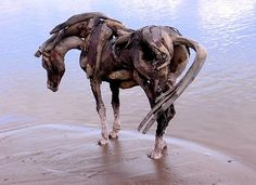 I love this artist...horse sculptures out of driftwood. I think the artist is Heather Jansch, but don't quote me on it.