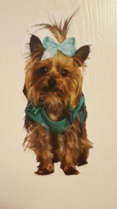381f785276f6a Bowbow jojo siwa s little curious  cute pup