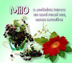 3.7 Milo