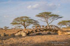 bones and sand, Olturot, Marsabit, Northern Kenya.