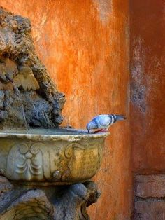 touchn2btouched:  Not only the thirsty seeks the water, the water as well seeks the thirsty~ Rumi