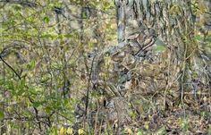 Камуфляж снайперов (10 фото)