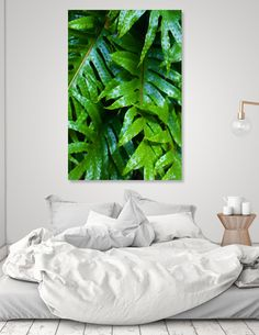 Discover «Hounds Tongue Fern», Numbered Edition Canvas Print by Hayley Graham - From $49 - Curioos