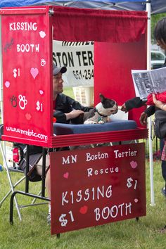 Too cute - boston terrier kissing booth Boston Terrier Rescue, Boston Terrier Love, Boston Terriers, Dog Love, Puppy Love, Toy Fox Terriers, Terrier Mix, Crazy Dog Lady, Kissing Booth